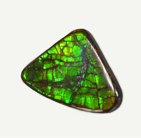 Green and Blue Ammolite