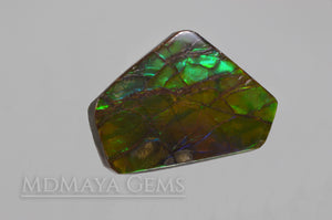 Green Ammolite Gemstone 10.77 ct from Canada