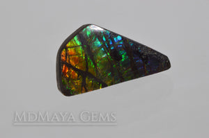 14.71 ct Ammolite Gem Freeform Cabochon from Canada Multicolour Iridescente Stone