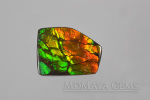 Amazing Multicolor Canadian Ammolite Gem freeform Cabochon of 14.76 carat, perfect loose gem for jewelry.