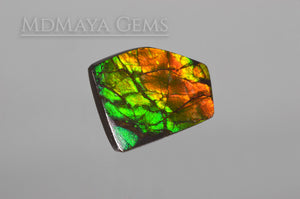 Amazing Multicolor Canadian Ammolite Gem freeform Cabochon of 14.76 carat