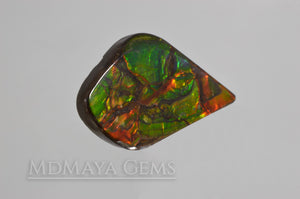 Top Quality Multicolor Ammolite Stone from Canada 22.23 ct