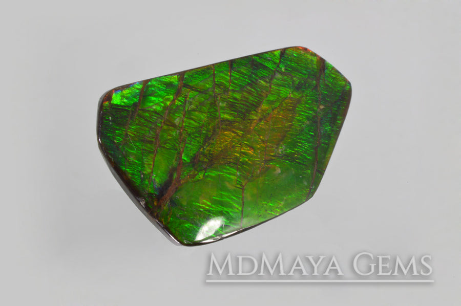 Shimmering Large Ammolite 24.43 carat from Canada,