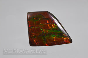 Big rainbow excellent colors Ammolite Stone 36.26 ct from Canada.