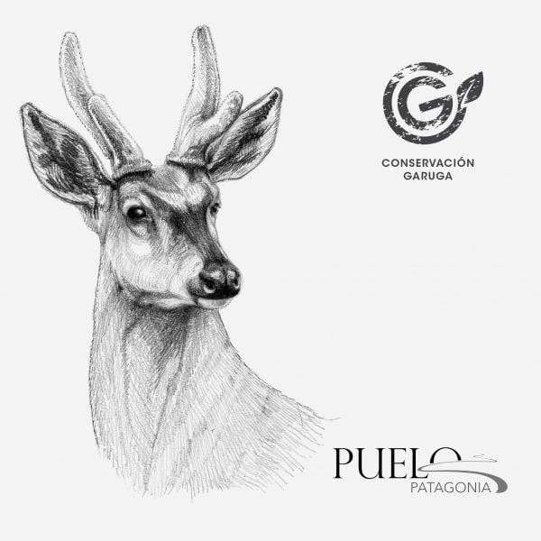 Conservation of huemul of Garuga with Puelo Patagonia