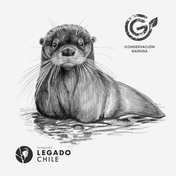 sustainable gifts Garuga Save the chilean otter - case