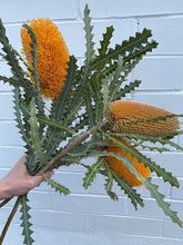 Load image into Gallery viewer, Banksia Protea