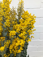 Load image into Gallery viewer, Yellow Blooming Acacia