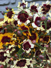 Load image into Gallery viewer, Local Coreopsis