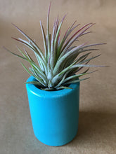 Load image into Gallery viewer, Small Tillandsia Planter