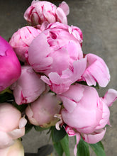 Load image into Gallery viewer, Peony (per stem)