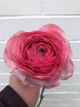 Load image into Gallery viewer, Japanese Ranunculus (per stem)