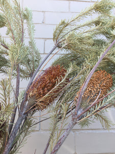 Dried Banksia