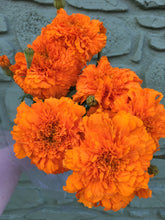 Load image into Gallery viewer, Marigolds