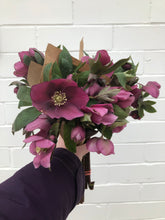 Load image into Gallery viewer, Hellebores