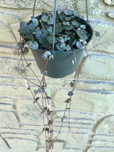 "Load image into Gallery viewer, 6"" String of Hearts Hanging Basket"