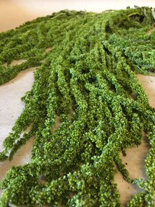 Dried Green Amaranthus