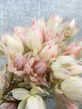 Load image into Gallery viewer, Blushing Bride Protea