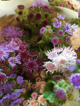Load image into Gallery viewer, Local Ageratum