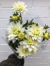 Load image into Gallery viewer, Local Dahlias