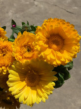 Load image into Gallery viewer, Calendula