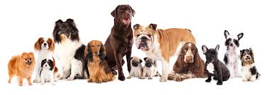 Dog Breeds for adoption