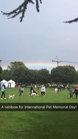 International Pet Memorial Day rainbow!