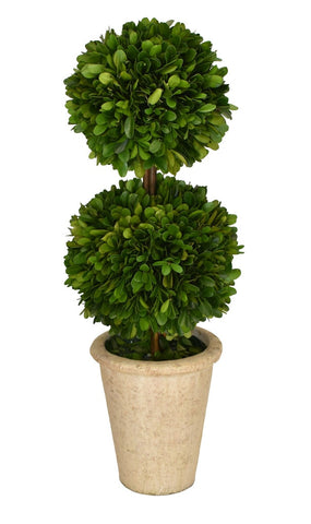 Preserved Boxwood Topiary- Double Ball 20""