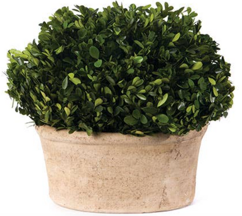 Oval Boxwood Topiary