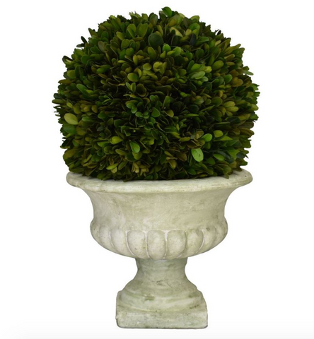Boxwood  Ball in Footed Urn