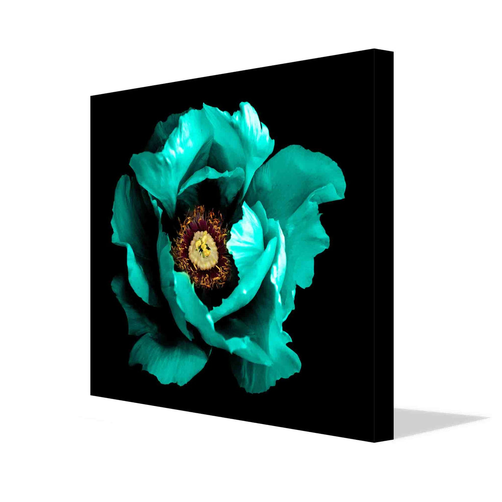 New Product Surreal dark, chrome, cyan, peony flower (Canvas Print)  - Andrew Lee Home and Living Homeware