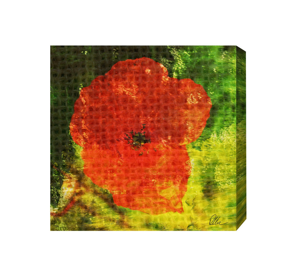 New Product Poppy  - Andrew Lee Home and Living Homeware