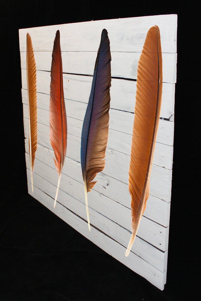 Reclaimed Wood Print - New Product Four Set of Beautiful and Colourful Bird Feathers (Reclaimed White Wood)  - Andrew Lee Home and Living Homeware