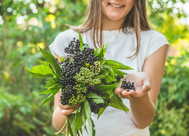 What Are Elderberries, and How Can They Help Your Immune System?