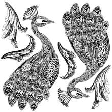 NEW!!!  Pavo Decor Stamp