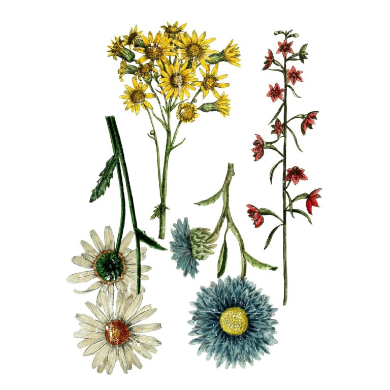 Wild Flower Botanicals Decor Image Transfer