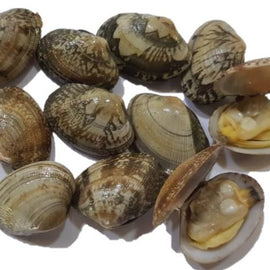 Korean Asari Clams
