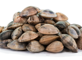 Short Neck Clams