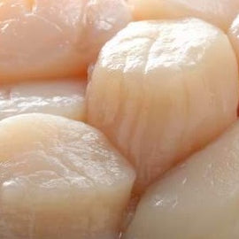 Japan Sashimi Grade Scallop