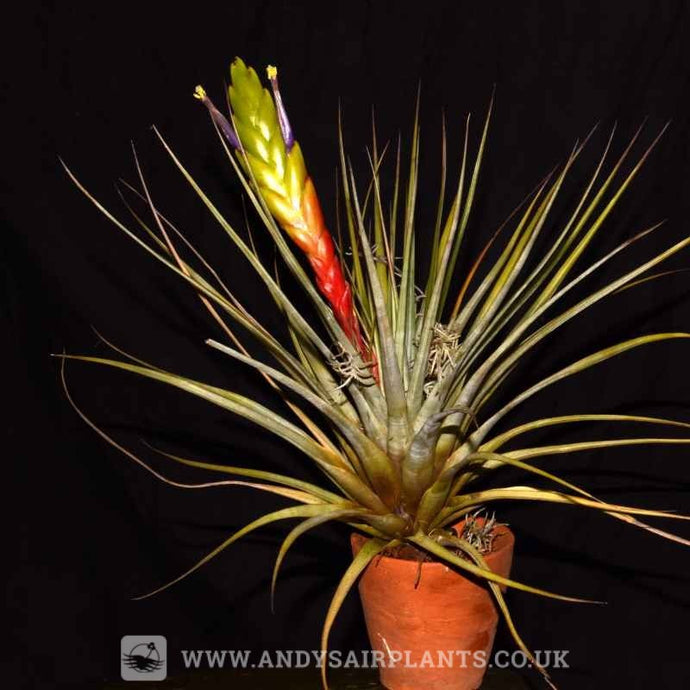 Mounting and Displaying your Air Plants