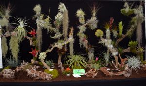 Andy's Air Plants display, Tillandsia, Air Plants, Bromeliads UK