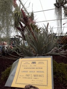 Large Gold Medal for my Andy's Air Plants display