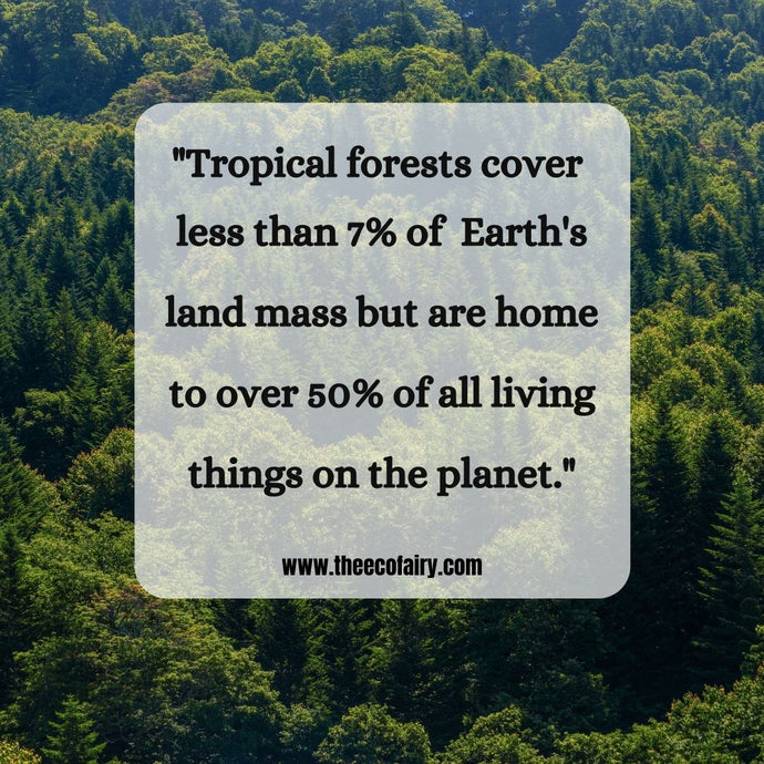 Tropical Forest Facts Everyone Should Know