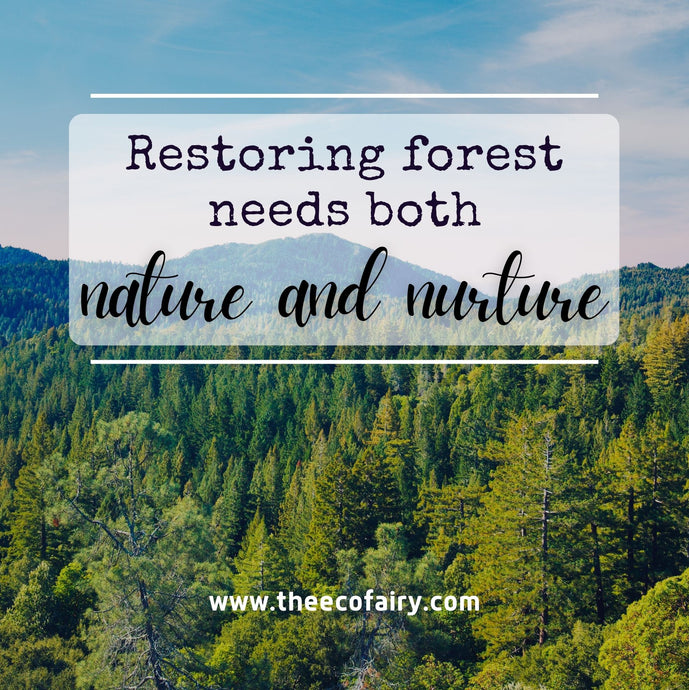 Helping Our Planet by Restoring Forest