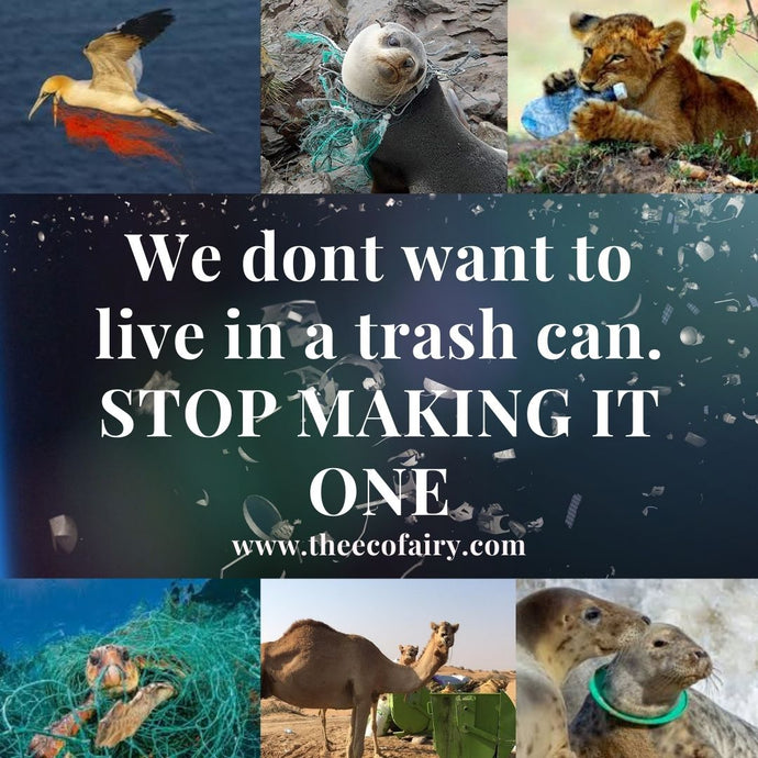 Litter Kills Wildlife