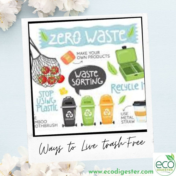 Ways to Live Trash-Free & Adopt A Zero-Waste Lifestyle