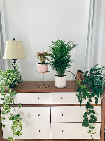 A plant filled room is a happy cozy room! Biophilic design is a huge trend for Fall 2020.