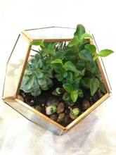 Load image into Gallery viewer, Whimsical terrarium for gift giving
