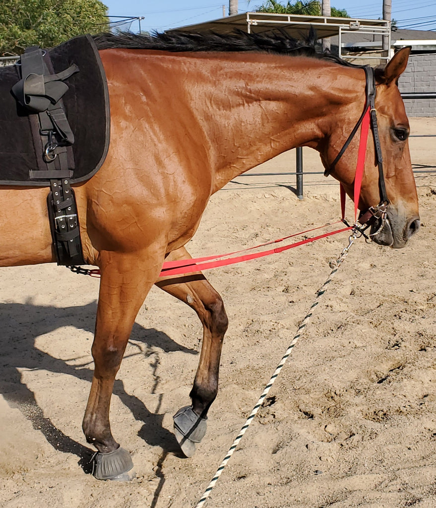 Neck Stretcher Head Setter Side Reins All In One Adjustable Elastic R Elastic Horse Gear
