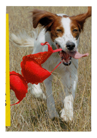 greetings: dog with red bra situation